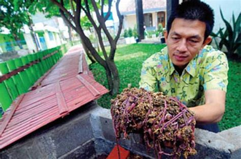 Prospeknya Usaha Budidaya Dengan wow usaha budidaya ternak cacing tanah hasilkan ratusan