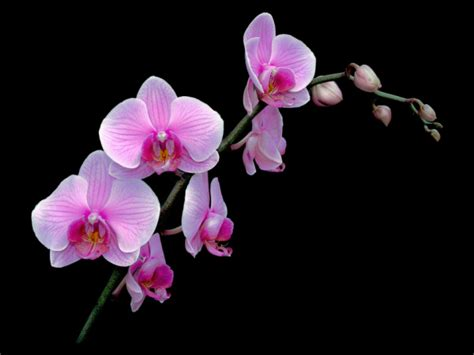 orchids beautiful orchid flowers and a symbol