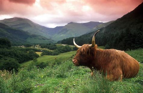 Scotland coach tours scotland sightseeing tours of scotland by coach