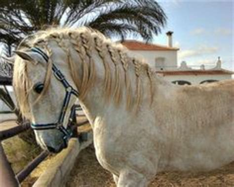 hairstyles for horses 1000 images about horse hairstyles on pinterest horse