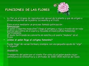 Las flores sus partes y funciones