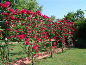 climbing roses trellis 27 garden trellis and lattice ideas wood metal