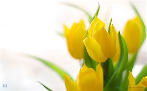 photos of spring flowers spring flowers backgrounds desktop wallpaper cave