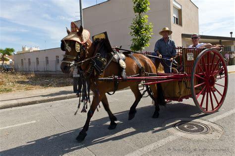 caballos cogiendo youtube caballo cogiendo con yegua fotos carreta con caballos