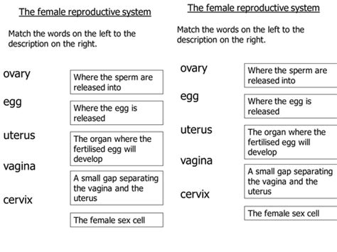 Pregnancy Worksheet 3 Answers