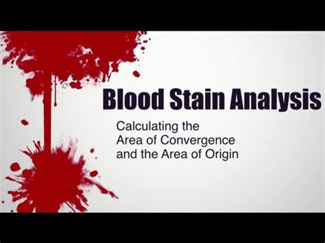 bloodstain pattern quiz forensic science forensic science blood spatter analyst