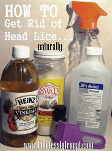 how to get rid of lice in your home how do you get lice hairstyle 2013