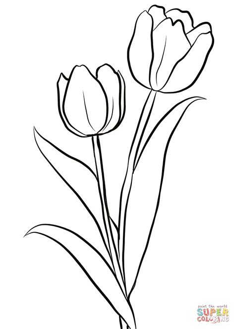 coloring page tulip flower two tulips coloring page free printable coloring pages