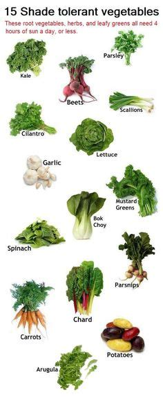 vegetables 4 hour 5 perennial veggies to plant once and enjoy forever