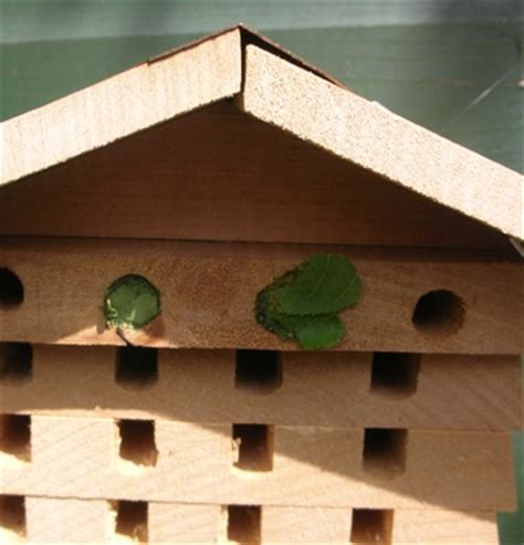 leaf cutter bees clear out the nesting tubes christine