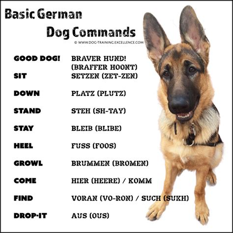 puppy in german 21 german commands to your