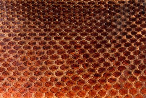 Texture skin scales snake animal pattern abstract ...