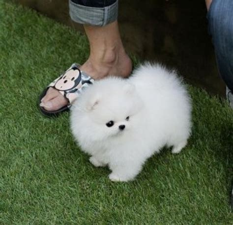 free puppies sc healthy bulldog puppies puppies for free adoption aiken sc orangedove net