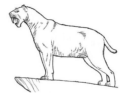 free saber toothed cat coloring pages