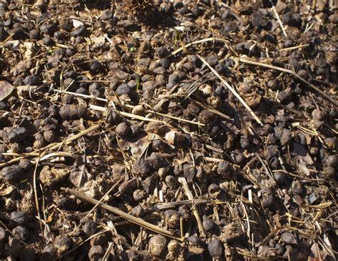 Pupuk Organik Kandang Sapi jenis pupuk kandang dan ciri cirinya bibitbunga