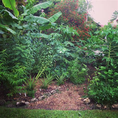 Tropical Edible Plants - food forestsready to grow gardens