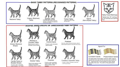 cat pattern types colour and pattern charts