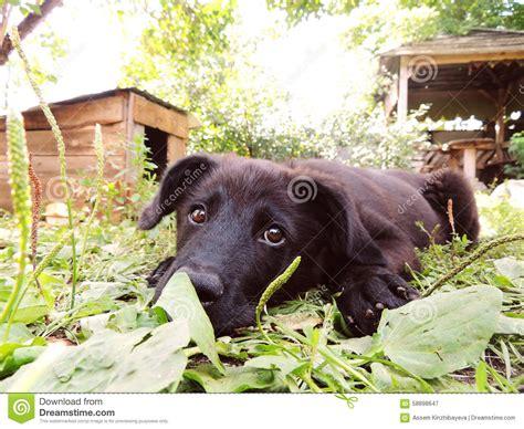 small black puppy small black puppy stock photo image 58898647