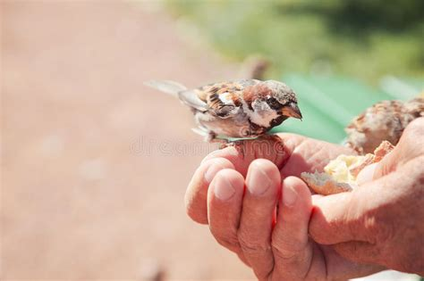 birds eating bread over hand of old man in a park stock
