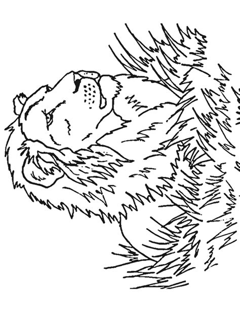 lion coloring pages realistic free animal coloring pages kids coloring sheets pdf