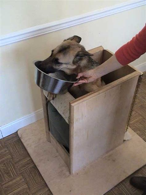 megaesophagus in dogs sirius