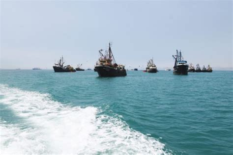 peru seafood fishing industry companies d j info peru sets anchovy fishing quota below expectations