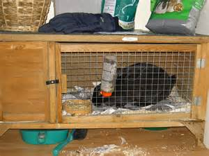Rabbit Cages And Hutches File Rabbit In Hutch Jpg Wikimedia Commons