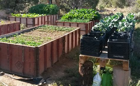 tall raised garden beds where are you buying your vegetable garden seeds the