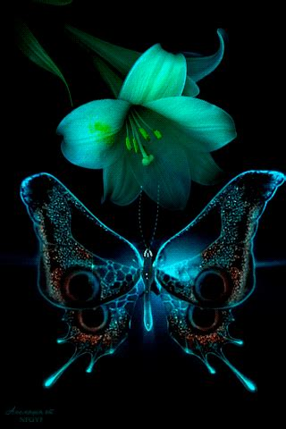 imagenes de movimiento original imagenes con movimiento de flores y mariposas para