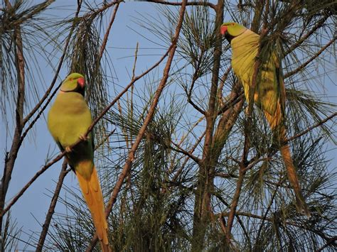 file two parrots at parrot bird sanctuary chandigarh