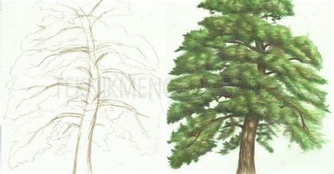 cara menggambar pohon pinus dengan pensil warna teknik menggambar