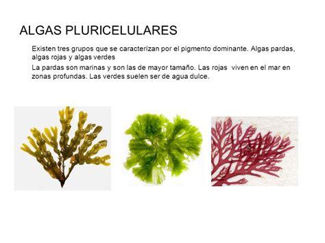 imagenes de algas pardas verdes y rojas clasificaci 211 n seres vivos ppt video online descargar