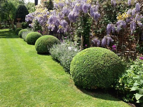 topiary care gworld 001 topiary care and maintenance of buxus s