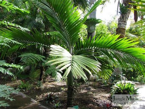 Palm Gardens by Palm Gardens
