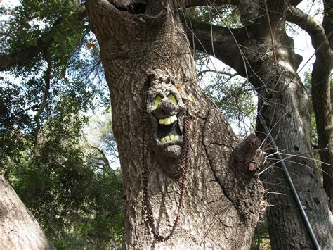 tree faces photos all the best tree faces talking trees for
