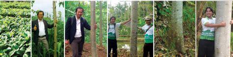 Tempat Jual Bibit Strawberry Di Bandung jual bibit jabon di bandung bibit jabon terbaik