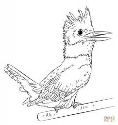 kingfisher coloring pages belted kingfisher coloring page free printable coloring