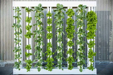 Growing Herbs Inside zipgrow living farm walls affordable productive living
