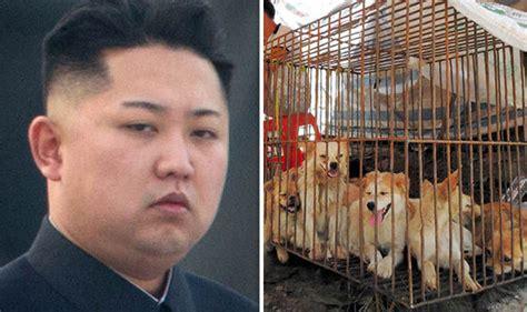 un dogs jong un urges koreans to eat for stamina nature news express
