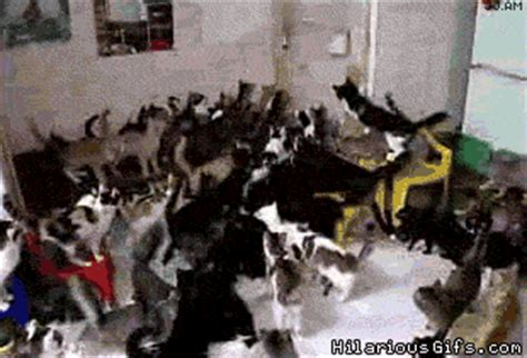 130 Cats Is Way Many by How Many Cats Is Many Hilariousgifs