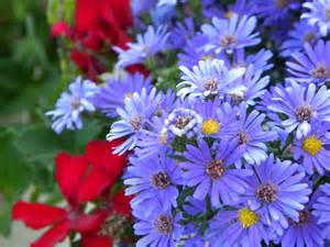 late summer flowers garden pinterest