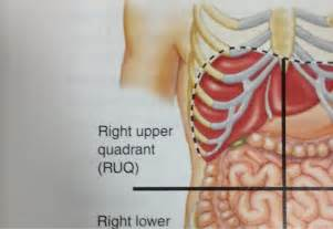 Right upper quadrant right lobe of liver gallbladder part of the
