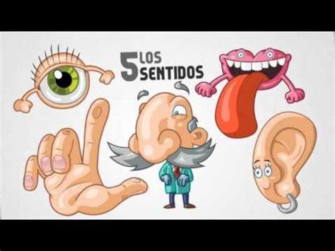imagenes de organos sensoriales 211 rganos sensoriales youtube