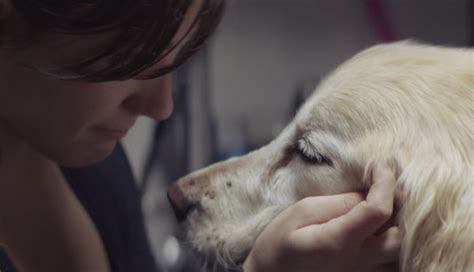sad puppy commercial chevrolet commercial makes sad doesn t sell cars is it real