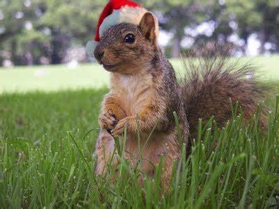 merry christmas    animals animals zone