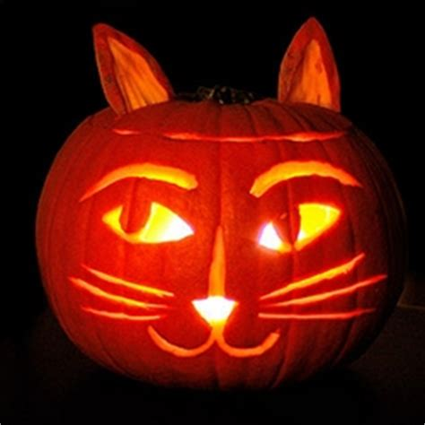 how pumpkin aids your cat s digestion