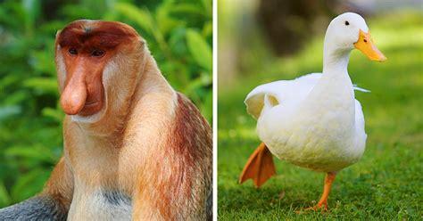 5 Animales Que Deberias Ver by 10 Repugnantes Datos De Animales Sacados National