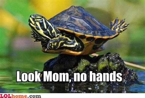turtle meme funniest turtle memes turtle memes turtles and
