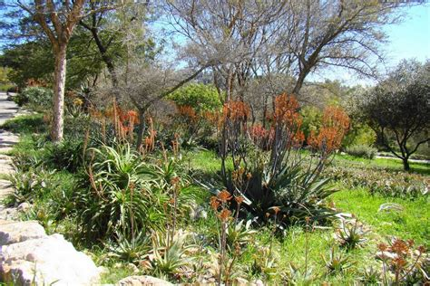 Jerusalem Botanical Gardens Panoramio Photo Of Israel The Jerusalem Botanical Gardens South Africa Plants In The
