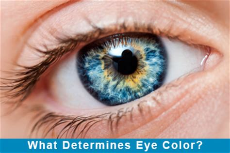 what determines eye color what determines eye color